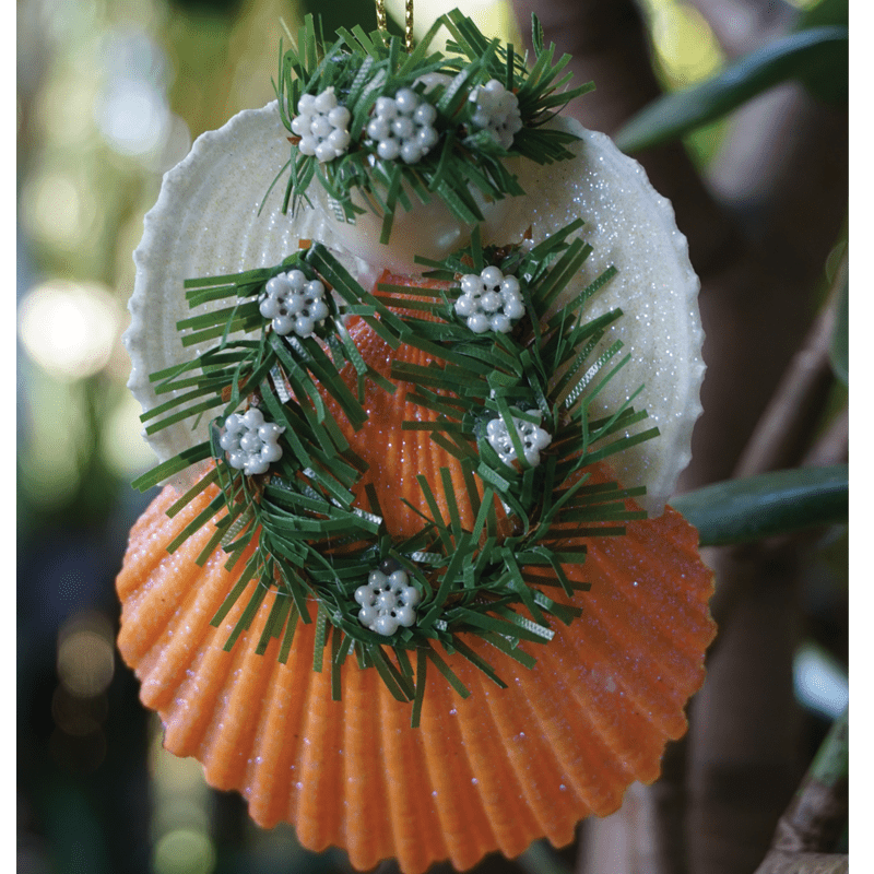 Maui Christmas Seashell Angel- Macnut Head
